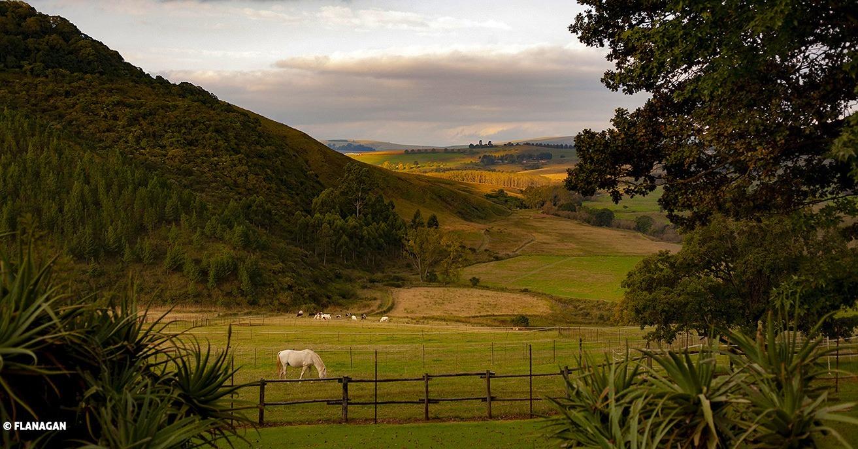 IMG_1546-HORSE-FARM-DARGLE-1313cut-2